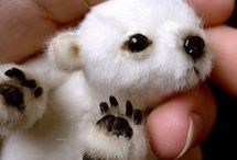 Cute Animals *-* / This board is about cute animals