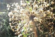 Seed heads
