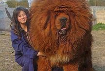 Stora hundar