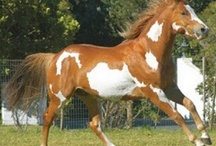 crazy for horses / by Reatha Spellacy