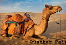 Pushkar fair 2013