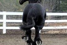 horses / ..