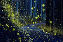 Firefly ♥