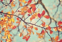 Fall Season / by Kristy, Life-n-Reflection
