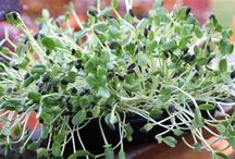 Sprouts &fresh herbs