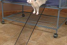 Rat Ideas