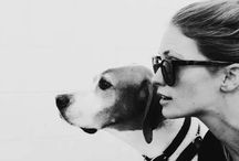photoshoot with dog
