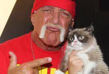 Cat's & famous people.