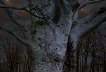 Stromy / https://cz.pinterest.com/xicotabonica/trees/