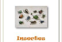 Insectes / Lapbook et ressources sur les insectes, de l'Association Carpe Diem