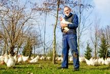 Ontmoet de Nederlandse pluimveehouder