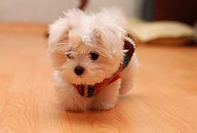 Puppies / All About Puppies Pets