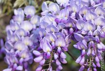Bush flower / flower essences