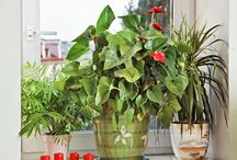 Inside plants / Plants that can survive in the apartmenr