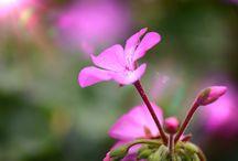 Plant Photograph