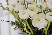 Bloemen en tuin