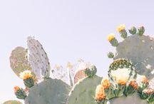 cactus photography
