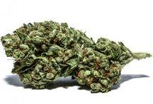 Marijuana Santa Brbara