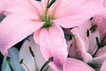 kukat perhoset