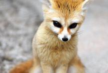 Animals :-) / Aninals