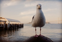 San Francisco's Supermodel Seagull / by My Life's A Trip