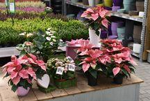 Ideen für den Winter / Tolle Zimmerpflanzen in pastelligen Farben