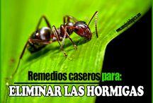 AHUYENTAR LAS HORMIGAS DE CASA / Remedios caseros para eliminar o sacar las hormigas de tu casa.