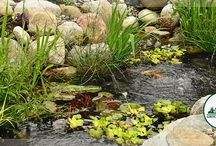 Landscape & Pond Blogs / Get insights and tips into designing and caring for your landscape and pond.