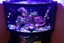 Aqua-Scaping Ideas