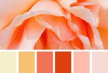 Palete culori