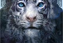 Tiger's curse / Ren ❤