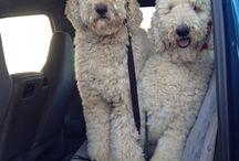 dogs / dogs i like, Hunde, die mir gefallen