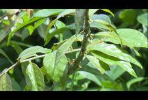 Plantas comestiveis