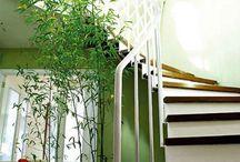 Houseplant Decor