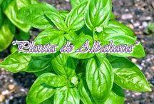 15 plantas sanadoras