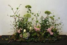 Bloem vegetatief flowers