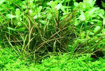 Carpet plants