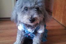 MURA / Crochet for my dog <3