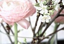 Gek op bloemen & planten!