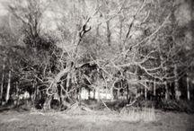 My analog photos