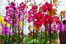 Orchideák farm