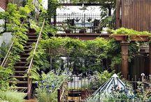 garden / outdoors / by Christine Grauer