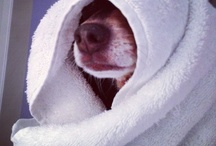 CLEAN DOGS / www.DogtailsShop.com