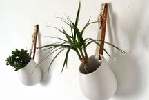 univers cactus&plantes