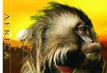 Movies Set in Africa / Movies Set in Africa