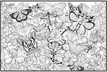 butterflies color