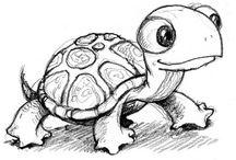 Tortues / Turtles