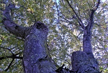 Trees > Nature's Architecture