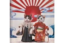 Crazy cat lady / by Kuma Lee