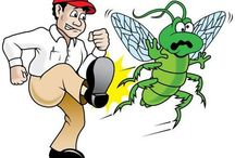 DIY : Remedies to Exterminate Pests And Insects Inside Your Home